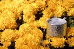 Hösten blommar i en kruka Gul chrysanthemum Nästa gåva i en silverask royaltyfri foto