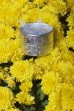 Hösten blommar i en kruka Gul chrysanthemum Nästa gåva i en silverask royaltyfria bilder