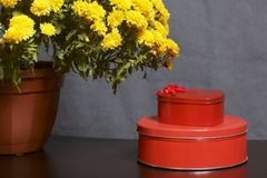 Hösten blommar i en kruka Gul chrysanthemum Nästa gåvor i tenn- askar royaltyfri fotografi