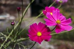Hösten blommar i en trädgård royaltyfria bilder