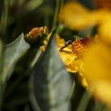 Hösten blommar i en trädgård arkivbild