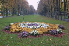 Hösten blommar på en säng i Kharkiv Gorky parkerar Royaltyfri Bild