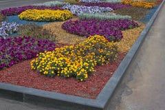 Hösten blommar på en säng i Kharkiv Shevchenko parkerar Royaltyfri Fotografi