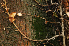 hösten branches treen Arkivfoton
