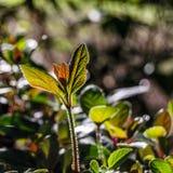 Hösten colors bakgrund Royaltyfri Bild
