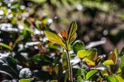 Hösten colors bakgrund Royaltyfria Foton