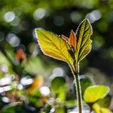 Hösten colors bakgrund Arkivfoton