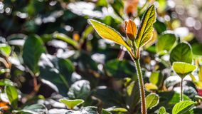 Hösten colors bakgrund Royaltyfria Bilder