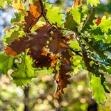 Hösten colors bakgrund Arkivbild