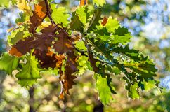 Hösten colors bakgrund Arkivfoto