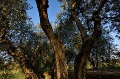 hösten colors ii fotografering för bildbyråer