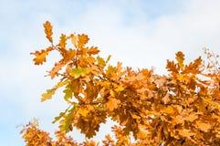 hösten colors leavesoaken Arkivbilder