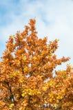 hösten colors leavesoaken Royaltyfria Foton