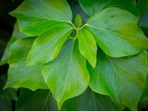 hösten colors seamless textur för leavesmodell Royaltyfri Bild