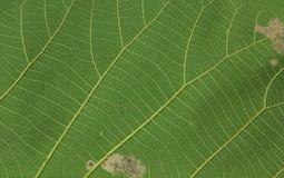 hösten colors seamless textur för leavesmodell Arkivbilder