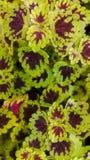 hösten colors seamless textur för leavesmodell Royaltyfria Foton