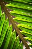 hösten colors seamless textur för leavesmodell Arkivfoton