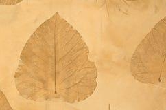 hösten colors seamless textur för leavesmodell Royaltyfria Bilder