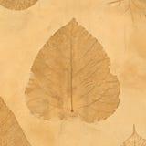 hösten colors seamless textur för leavesmodell Royaltyfri Foto