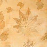 hösten colors seamless textur för leavesmodell Fotografering för Bildbyråer