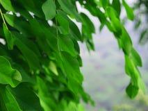hösten colors seamless textur för leavesmodell Arkivfoto