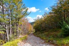 hösten colors skogen Royaltyfria Bilder