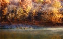 hösten colors skoglaken nära royaltyfria foton