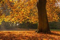 hösten colors treen Arkivbild