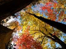 hösten crowns treen Royaltyfri Fotografi