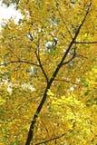 hösten dusseldorf hofgarten leaves Royaltyfria Foton