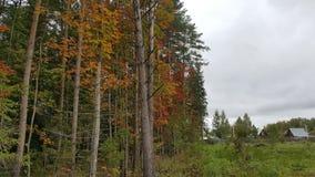 hösten exponerar med ljusa färger royaltyfri foto