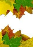 hösten färgade leaves Royaltyfri Bild