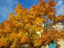 Hösten färgade ljust med en ljus himmel royaltyfri fotografi