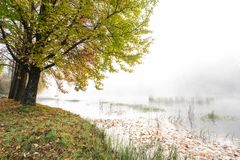Hösten färgade sidor på trädet och vattnet som täcktes av mist royaltyfri bild