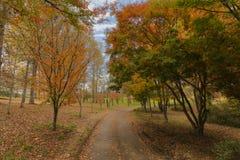 Hösten färgade träd och sidor på jordningen arkivfoton