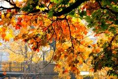 Hösten färgar Arkivbilder