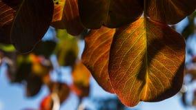 Hösten färgar 02 Royaltyfri Fotografi