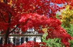 Hösten färgar Royaltyfria Bilder