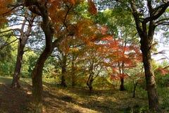 Hösten färgar #5 Royaltyfri Fotografi