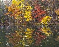 Hösten färgar royaltyfria foton