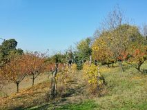 Hösten färgar arkivbild