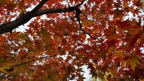 Hösten färgar fotografering för bildbyråer