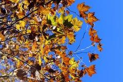 Hösten färgar bakgrund Frankrike för sidalövverknedgången royaltyfri fotografi