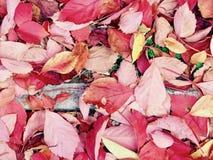 Hösten färgar generisk vegetation för sidor arkivfoton