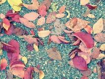 Hösten färgar generisk vegetation för sidor royaltyfri fotografi