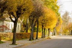 Hösten färgar gränden i Litauen Arkivbild