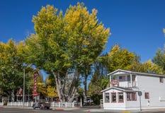 Hösten färgar i den huvudsakliga gatan Bridgeport, Kalifornien Royaltyfri Bild