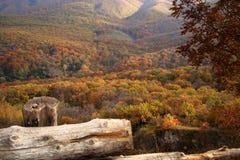 Hösten färgar i skogen med hjärtan Arkivfoton