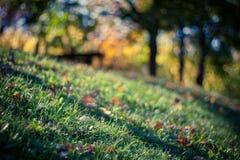 Hösten färgar med Bokeh Arkivfoto