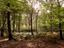 Hösten färgar på engelska skogsmark Royaltyfria Foton
